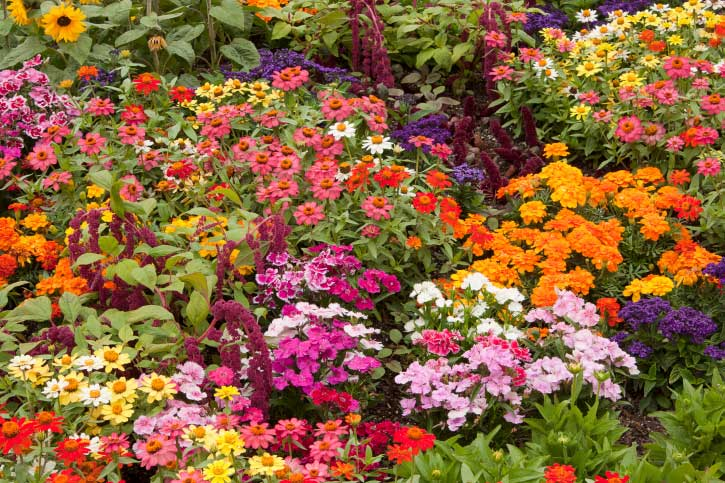 Fall is Time For Planting